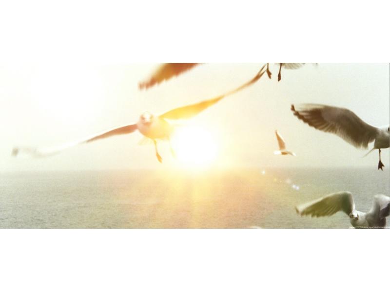 Peter Bischoff: Gulls IV
