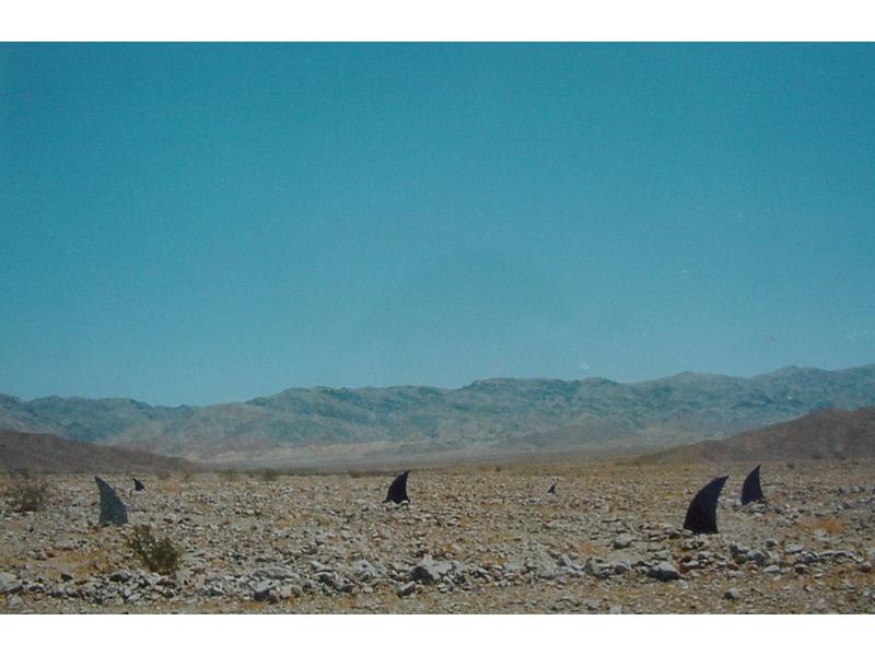 Mirko Siakkou-Flodin: Haifischflossen in der Wüste. Death Valley 1994