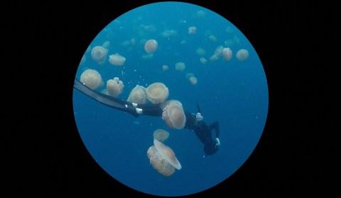 Barbara Ehrmann: Jelleyfish_Bubbles, 2018