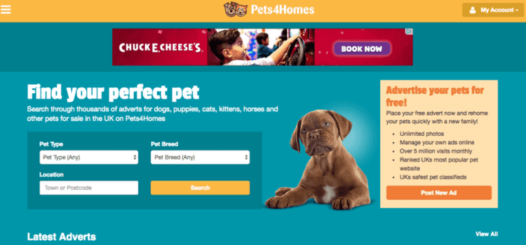 The Best Pet Websites for 2019 | RAVE Reviews