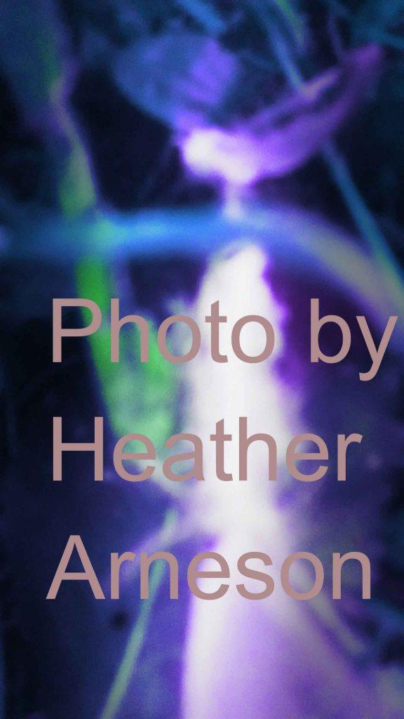 Dancer-photo by Heather Arneson copy