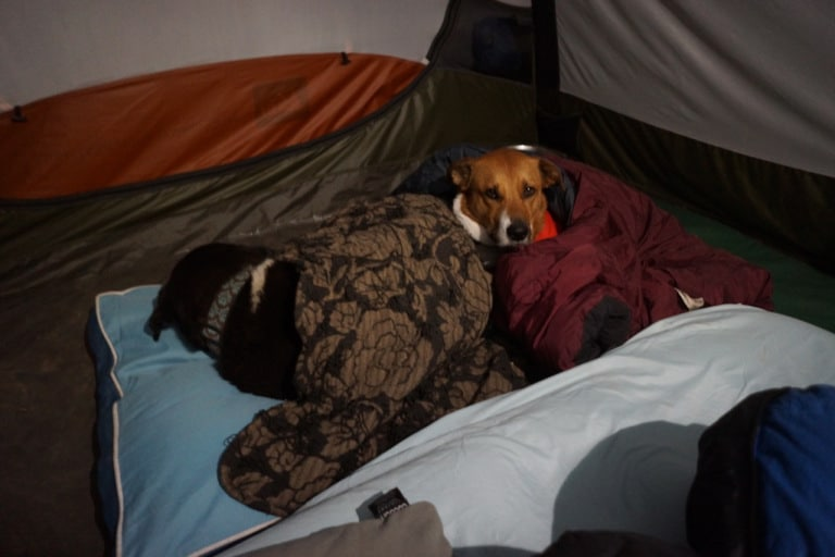 Camping with our dogs in southern Utah