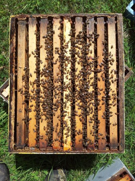 No worries, this is a daytime hive inspection.