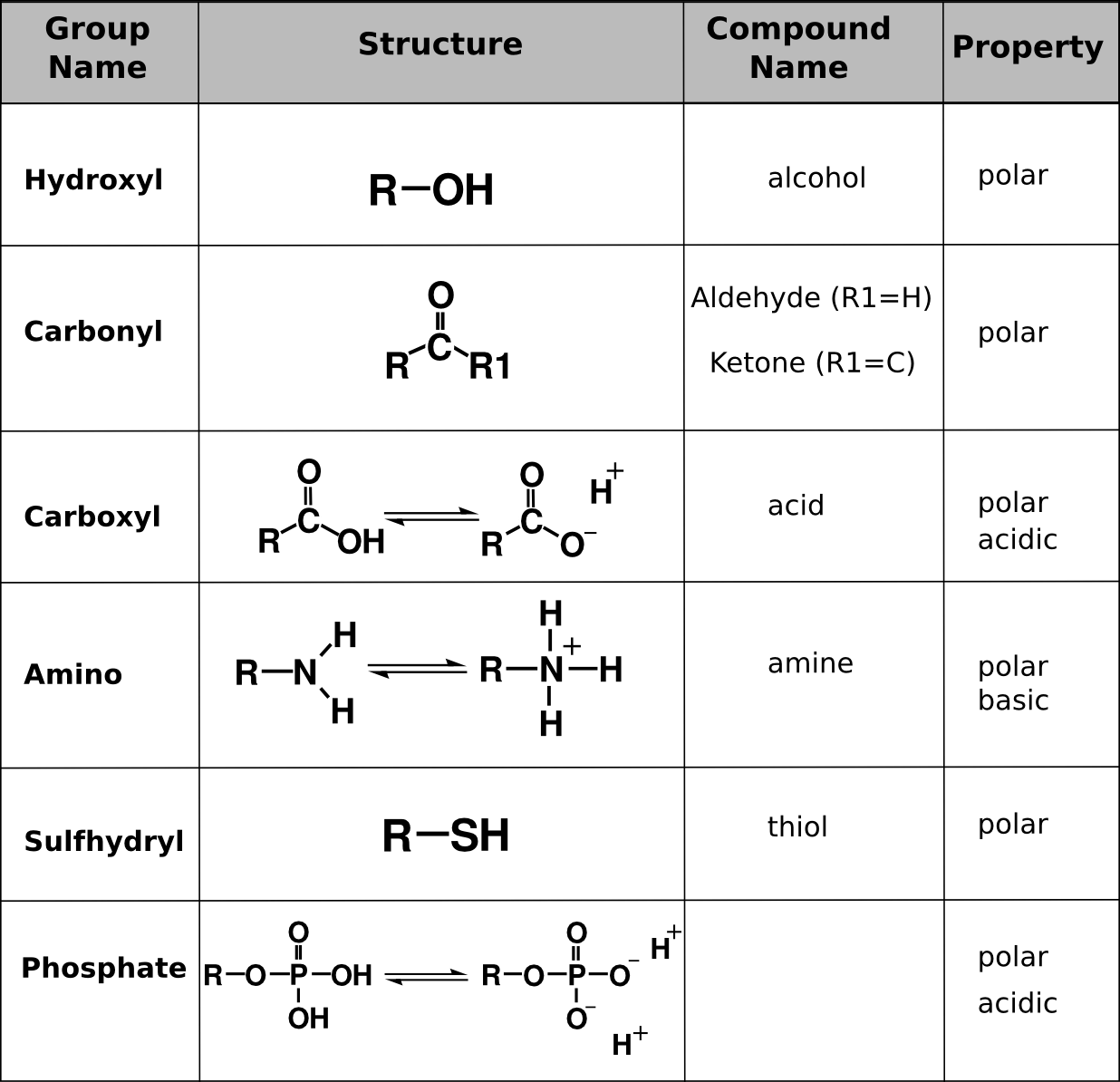 Biologically Important Macromolecules