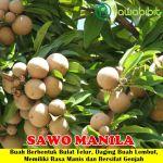Bibit Sawo Manila