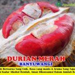 Bibit Durian Merah Banyuwangi