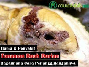 Hama penyakit Durian