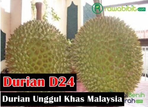 Sejarah Durian D24