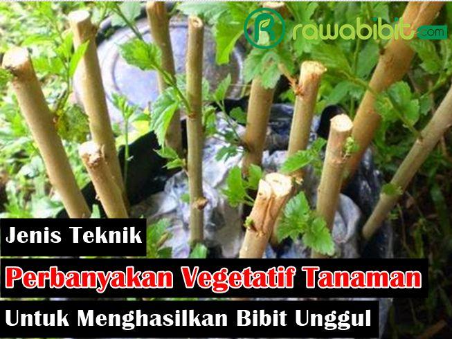 6 Jenis Teknik Perbanyakan Vegetatif Pada Tanaman Untuk Menghasilkan Bibit Yang Berkualitas Unggul