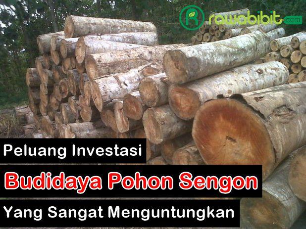 Peluang Investasi Sengon