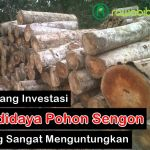 Peluang Investasi dan Analisis Usaha Budidaya Pohon Sengon Yang Sangat Menguntungkan