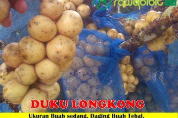 Duku Longkong