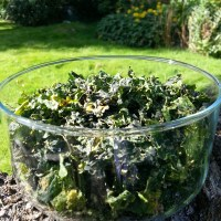 RAW DEHYDRATED THAI GREEN CURRY KALE CHIPS RECIPE