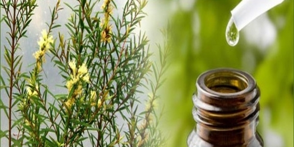 20 Tea Tree Oil Uses + a Giveaway of Pure Australian Tea Tree Oil
