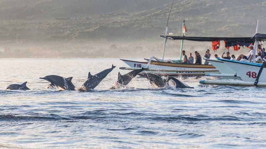 Lovina Beach, dolphins in Lovina