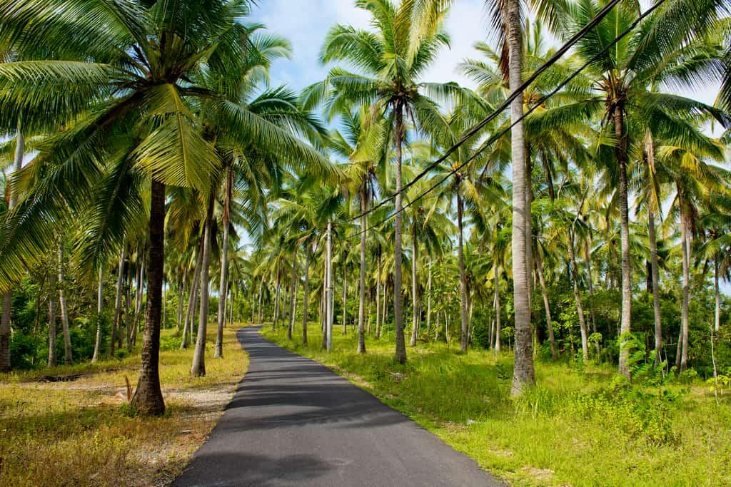 Nusa Penida roads
