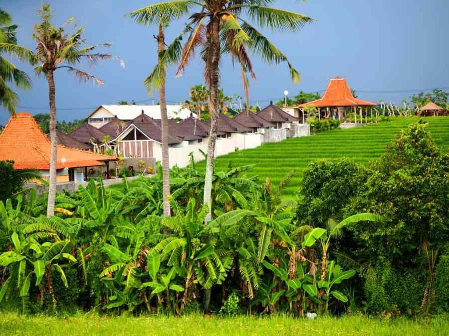 Canggu rice paddies, rice fields