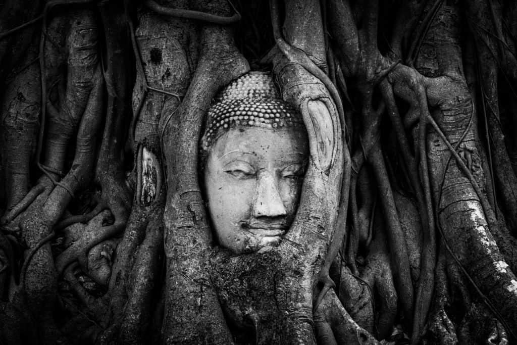 buddha head, Ayutthaya, Thailand