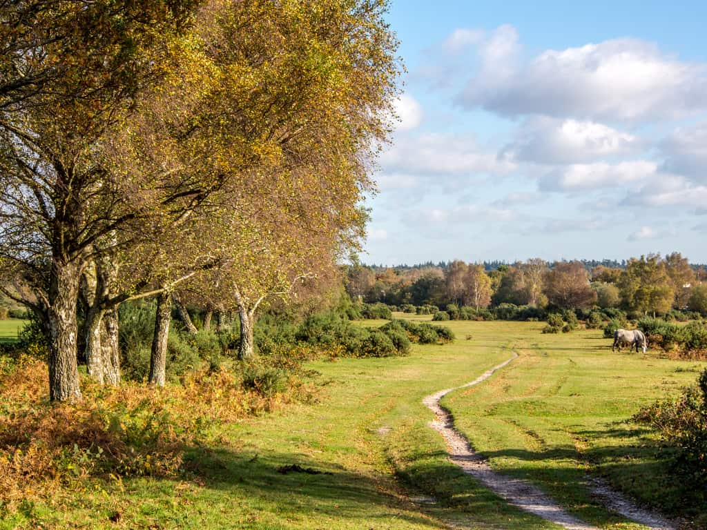 new forest, uk e