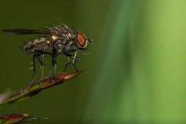 Macrophotographies (insecte, araignée, gastéropode...) réalisées par Baptiste Leroy (aka RAWMinet), photographe en Bretagne (Carhaix-Plouguer).