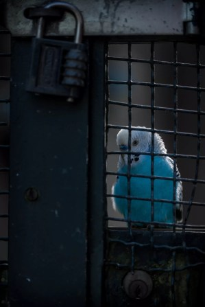In cage...