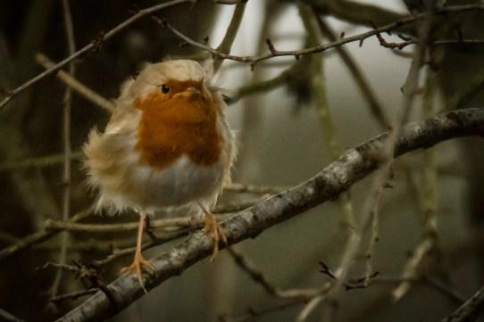 Robin in the wind ¡