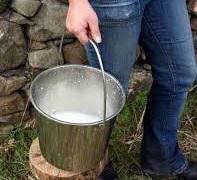 farmer milking