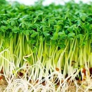 cress-seeds-common-10000-seeds.jpg