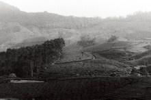 The tea valleys of Munnar.
