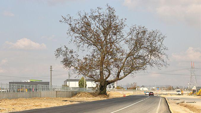 double way guzergahi changed for tree