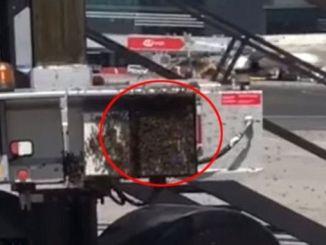 Diesmal die Istanbuler Flughafenbiene
