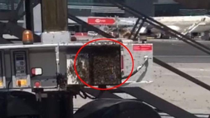 αυτή τη φορά η μέλισσα του αερολιμένα της Κωνσταντινούπολης
