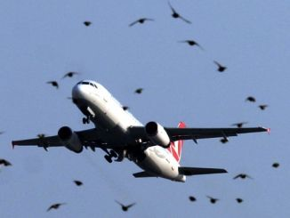 TU Avión golpeando la bandada de pájaros de regreso al aeropuerto de Estambul