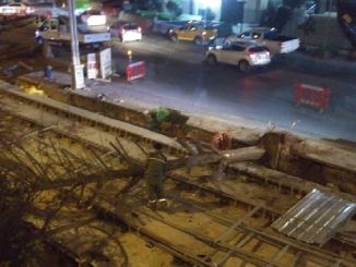 What happened to the trees of Izmit cut for the tram project