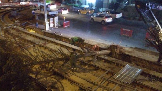 Τι συνέβη με τα δέντρα του Izmit που κόπηκαν για το έργο του τραμ