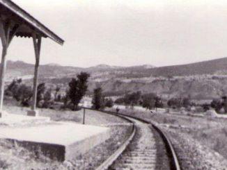 garis lonceng berang-berang