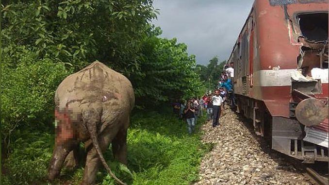 indijski vlak tračnice ribnjak mreže carpti