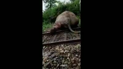 india train rails net carpti std original
