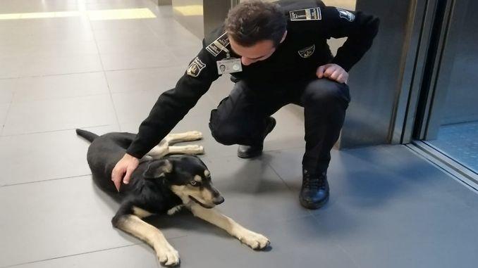 cekmekoy Metro Gare den Hond erakoum hat vill Sécherheetsmomenter