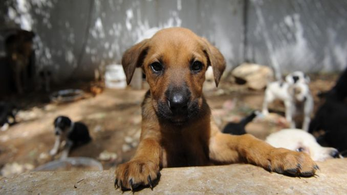 interior ministry did not forget stray animals