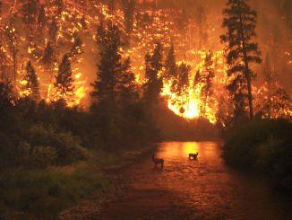 skovbrande vil blive opdaget med kunstig intelligens