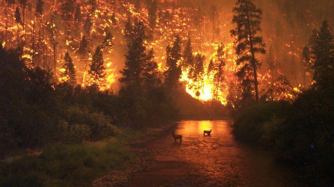 Waldbrände werden mit künstlicher Intelligenz erkannt