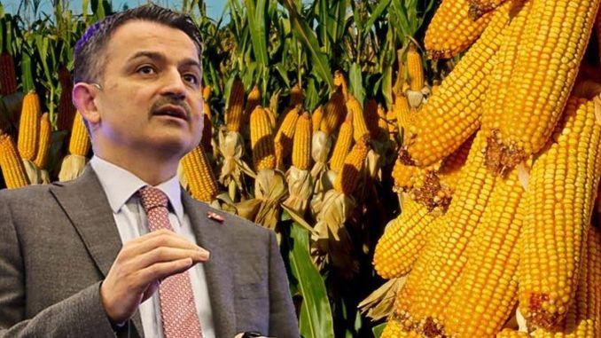A kukorica vételárai meg vannak határozva