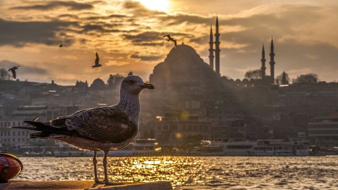 The number of tourists visiting Istanbul decreased by percentage points on a yearly basis in June