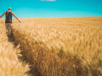 86 Juta Lira Pembayaran Dukungan Pertanian kepada Produsen Akan Dilakukan Besok