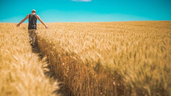 86 млн. Лири плащания за земеделска подкрепа на производителите ще бъдат извършени утре