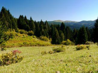 Hvor er Çambaşı Plateau i Ordu-provinsen, og hvordan skal man hen?