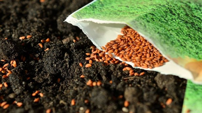 82 Domestic Seed Types Developed were Offered to Sector Use