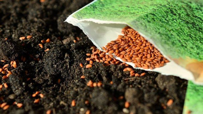 82 Разработени домашни видове семена бяха предложени за използване в сектора