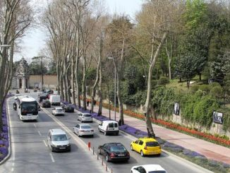 Unhealthy Trees Are Renewed in Istanbul
